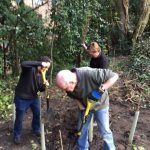 Volunteers planting a new hedge